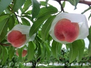 peach1502